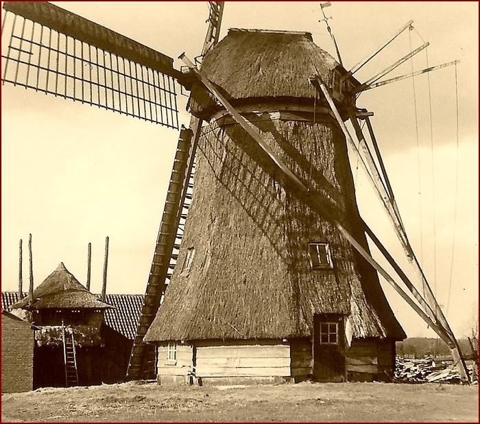Links achter de molen staat de oorspronkelijke stoltenberg, toen in gebruik voor boven opslag van hooi voor eigen gebruik en beneden waarschijnlijk kippen, 1962.