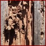 opgevreten-hout-150k